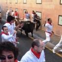 203 : 牛追い