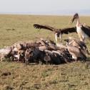 260 : 鳥同士の戦い