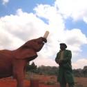 281 : 象の孤児院