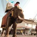 320 : 象祭り