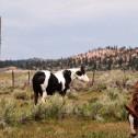 175 : 牛のような馬