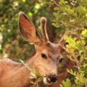 177 : ニヒルな鹿